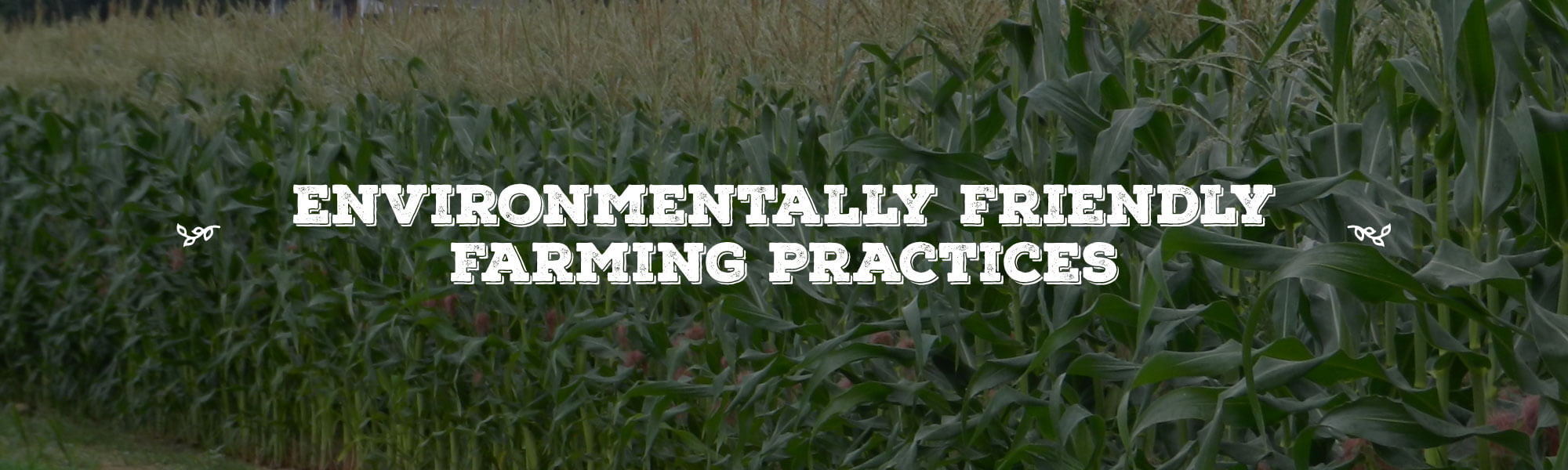 Environmentally Friendly Farming Practices overlay on image Corn Field